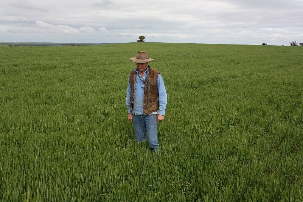 """Reefinate is a word you can bank on Kulin farmer Brendon Savage standing in a healthy crop of wheat growing on a ridge of typical ironstone country in a paddock characterised by under-performing crops. THERE is a new word you can add to your farming dictionary. It's 'reefinate' and I predict it will be in common use within the next three years. The word simply explains the act of crushing stones with an aptly-named Reefinator, made by Cutts Engineering, Manjimup under licence from its inventor, former Yuna farmer Tim Pannell. The Reefinator is designed to dig up common laterite rock and crush it, to create topsoil which can be sown to crop. My prediction is that even bank managers will know exactly what you are talking about when you explain to them the benefits of reefinating your unproductive country. """"I told the bank manager I also wanted to buy a Reefinator because the property I wanted to buy had a lot of paddocks of ironstone ridges,"""" Brendon said. """"I told him I could bring that land back into production using the Reefinator. """"So factoring in the cost of the Reefinator, the numbers stacked up for the bank."""