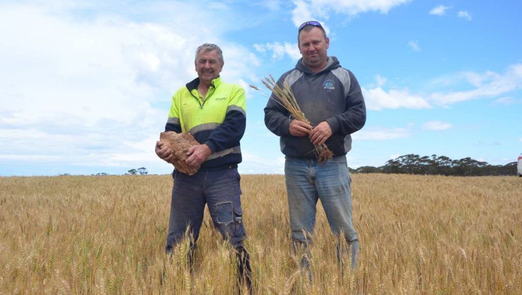 "John and Shane Rathjen with a hunk of limestone rock, one of the few of its size left in the paddock at Cambrai after being reefinated. A HEALTHY barley crop is standing on a previously non-arable paddock near Cambrai thanks to a bold management decision by Millendella father and son John and Shane Rathjen. The paddocks were littered with limestone rock, some patches worse than others, which caused major headaches in their initial seeding and ploughing attempts. After a couple of years of frustration and not being able to crop the new block, the Rathjens opted to try a Reefinator - a sled with hardened tines mounted in front of a cylindrical ribbed roller that is pulled behind a tractor and designed to rip and shatter surface rock. ""We had seen the Reefinator on the internet, went to a field day and spoke to a couple of guys - one who makes them over in WA and another who said we wouldn't look back,"" Shane said. ""It has turned land into productive land because we wouldn't have been able to sow it otherwise. ""If you have a wind on the harder ground, the crop blows over, whereas on this, the reefinating has allowed the root systems to go downwards and create a stronger network."""