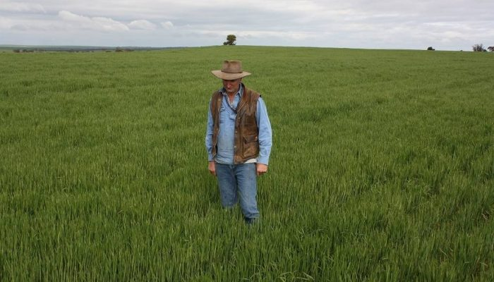 Reefinate is a word you can bank on Kulin farmer Brendon Savage standing in a healthy crop of wheat growing on a ridge of typical ironstone country in a paddock characterised by under-performing crops. THERE is a new word you can add to your farming dictionary. It's 'reefinate' and I predict it will be in common use within the next three years. The word simply explains the act of crushing stones with an aptly-named Reefinator, made by Cutts Engineering, Manjimup under licence from its inventor, former Yuna farmer Tim Pannell. The Reefinator is designed to dig up common laterite rock and crush it, to create topsoil which can be sown to crop. My prediction is that even bank managers will know exactly what you are talking about when you explain to them the benefits of reefinating your unproductive country.