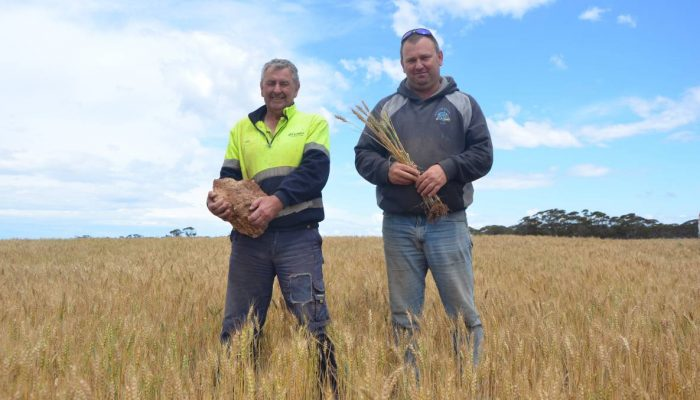John and Shane Rathjen with a hunk of limestone rock, one of the few of its size left in the paddock at Cambrai after being reefinated.